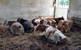 Agriturismo casinetto serle – azienda agricola (1)