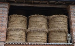 Agriturismo casinetto serle – azienda agricola (6)