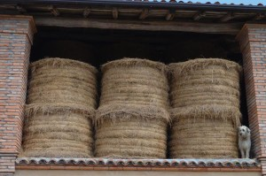 Agriturismo casinetto serle - azienda agricola (6)