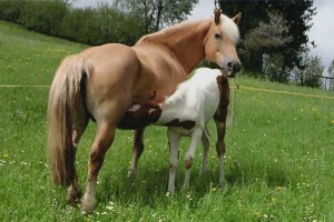 cavalli-al-pascolo-agriturismo-casinetto