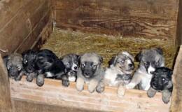 piccoli-cuccioli-crescono